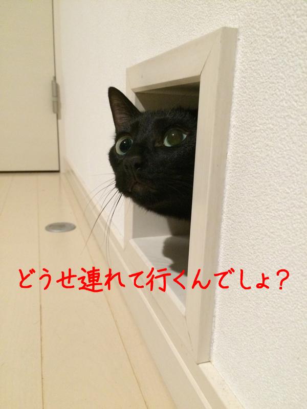 cat_hole_lid_3d_print_02
