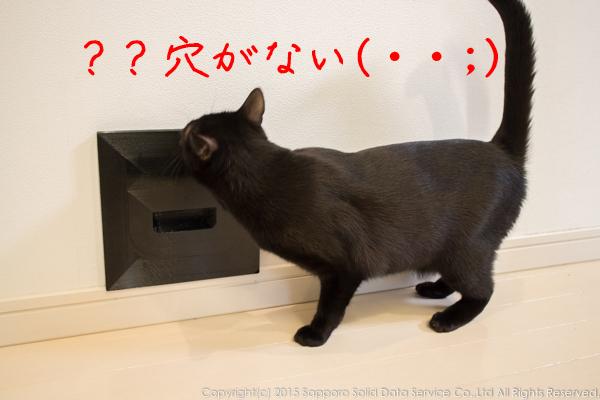 cat_hole_lid_3d_print_12
